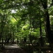 平林寺の新緑