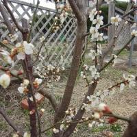 早春の庭仕事