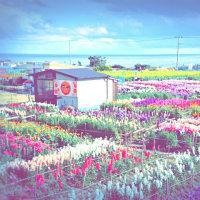 温泉とお花畑と苺フェア