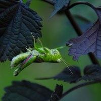 幼虫から蛹へ