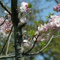 2017-04-23 今日の記録 都立桜が丘公園散策