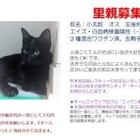 熊本被災猫の里親さん募集