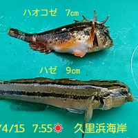 笑転爺の釣行記 4月15日☀ 久里浜海岸