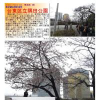 花巡り 「桜-その389」 台東区立隅田公園