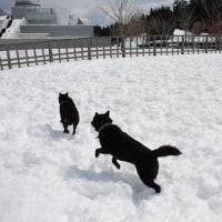 雪*道の駅富士吉田