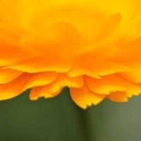 4/25 今日の花たち
