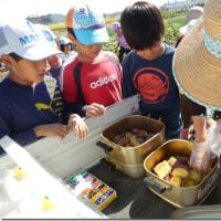 ▲キラリ土曜教室「れんこん村の自然体験隊」で芋掘りだよ