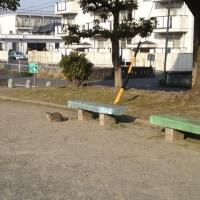 遠くの方から、猫っ視線・・・( •ω•ฅ)
