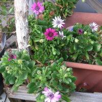 我が家の花達4月P2