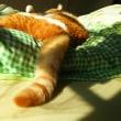 🐾 猫、寝正月😸