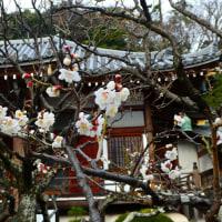 『寺社の梅』 地福寺