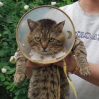 バラの写真と猫と現場作業員宇宙人系の話とか
