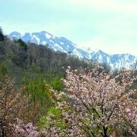 新穂高ロープウェイ Vol. 2 ~桜と残雪