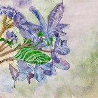 透明水彩で描くアジサイ