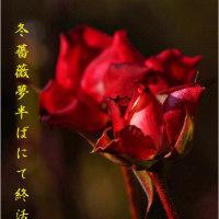 冬薔薇(写真俳句)と「鷹羽狩行の『作句の留意点』抄」