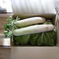 近隣の方からお野菜、いただきました!