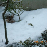 少しうんざり 雪景色3日目