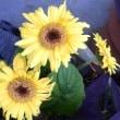 咲いた花たち