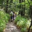 自然堪能の森