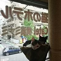 猫はハンモックが好き♪が確定!
