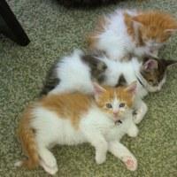 子猫ちゃん❤