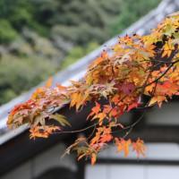 定番の京都観光です