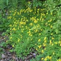 足元に咲く花