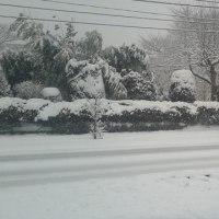 雪だよー。
