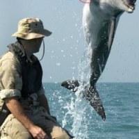 サメを操り情報収集:米海軍