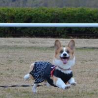 ストレス発散(^^)v ディスクで爆走♪ ~利根川敷島河川敷~