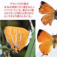 1.チョウやガの翅に残る鳥の嘴によってできた傷から何がわかるか?その6 スライド6.