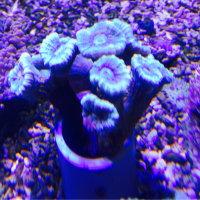 サンゴ入荷しました