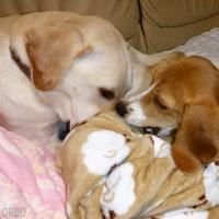 【ソファで毛布を・・・】