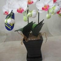 造花の胡蝶蘭の入荷