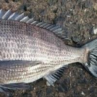 17.2.14 (火)チヌ釣り