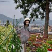 タイサンボクの咲くところ