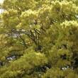 歩きカメラ4、新宿御苑