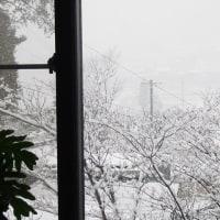 今日も雪降り