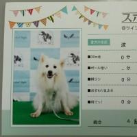「スポWan!検定」燃ゆ(DOG!フェスタ@ツインメッセ静岡その3)