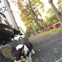 20170426の猫たちと時々犬