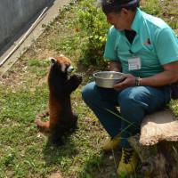 -2483- レッサーパンダを見に動物園へ