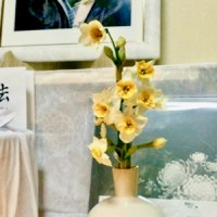 洗濯物と水仙