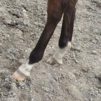 フェニーチェ'16・当歳募集馬レポート