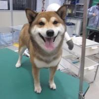 トリミング犬ご紹介トリミング犬ご紹介