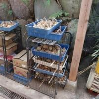 タマネギの保存方法