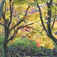 金沢の秋2016-10 兼六園 ⑥(完) 霞が池ほか
