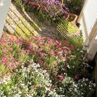 裏庭は春爛漫