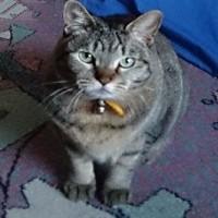 岩合さんのネコ写真