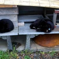 軒下の黒猫。