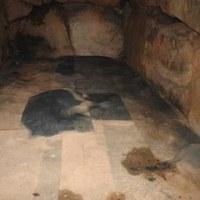 奈良県高取町にある 「与楽古墳群」